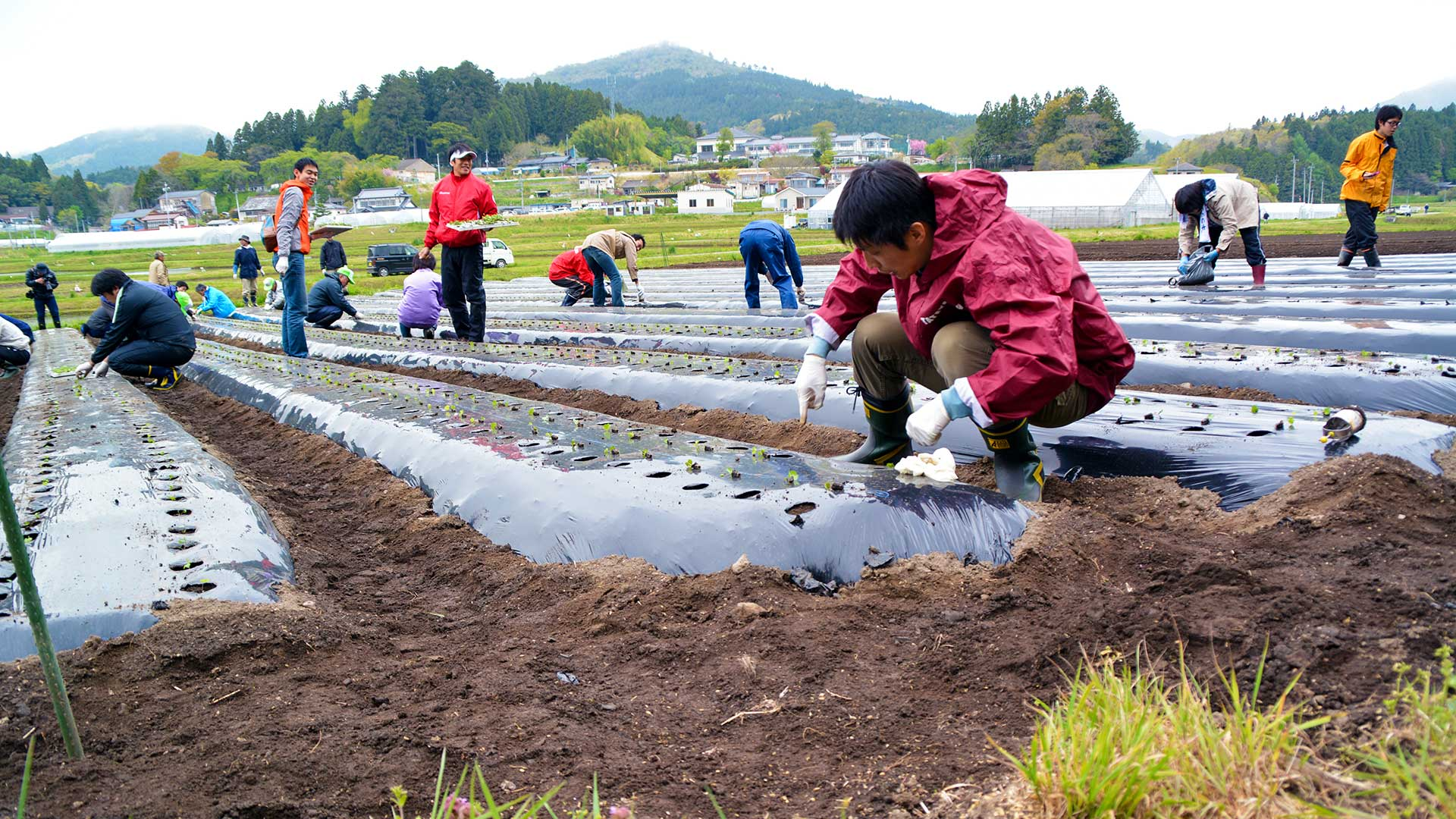 農作業をする企業ボランティア