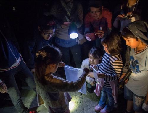 ホタルを探そう!夜のお散歩会 大人も子どもも大興奮