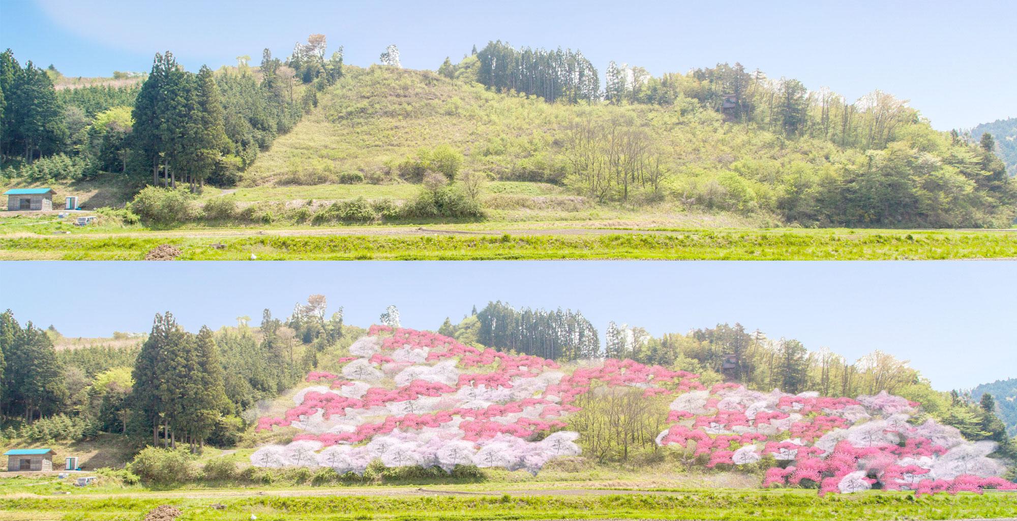 花見山プロジェクト